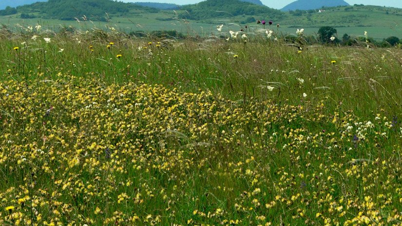 Sásdi-meadow in the Káli Basin